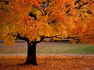 golden_tree_1