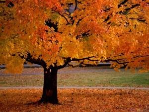 golden_tree_1